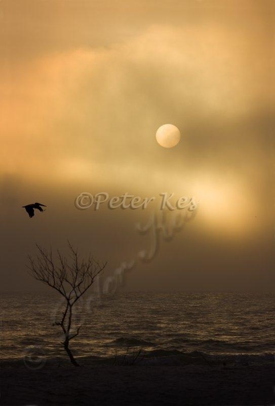 sunset_at_estero_15_02_2009_img_8540