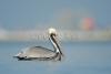 pelican_800_sw-fla-2012_20120210_kes_1201