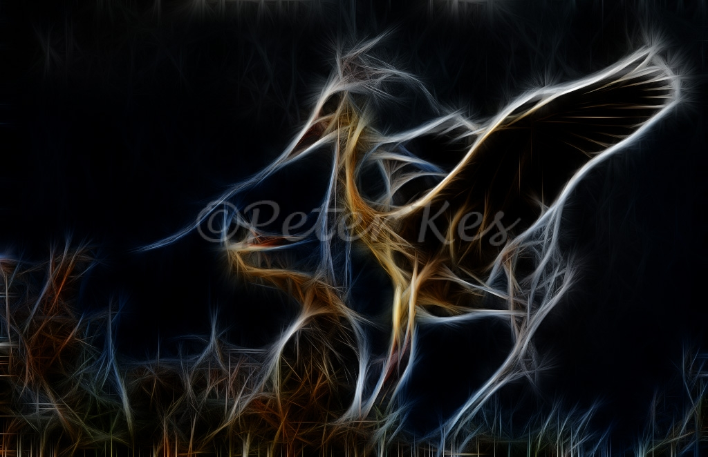 fract-blue-heron-nesting_camargue_20130610__90r5965