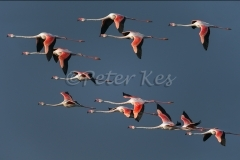 flamingo-glight-ac_camargue_20130610__90r5720