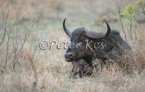 buffalo_sa_ug_20141022__90r6602