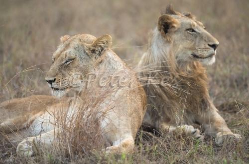 lions_sa_ug_20141021__90r5464