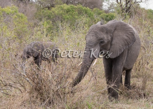 elephant-mother_sa_ug_20141023__90r7284