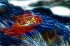 fract-sallylightfootsurf_galapagos_20110707_gy9c3013