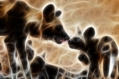 fract_1024-african_wildlife_wild-dogs_jock5dii_24-09-2009_img_3644