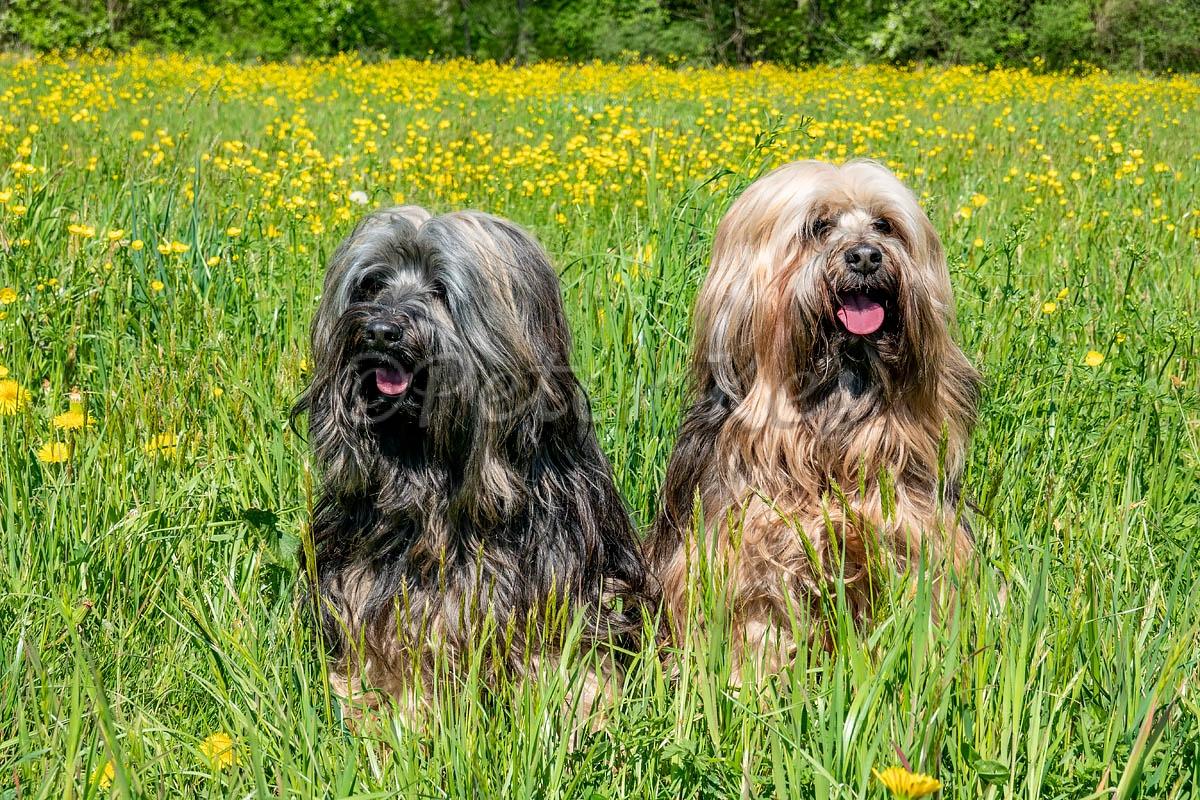 Dogs_Oberwil_20200413_DSC01087