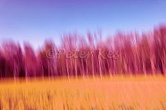 Blur-Green-Desat_Oberwil_20200410_DSC01039