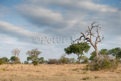 landscape_sa_ug_20141021_dsc00243